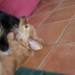 Aro und die heißgeliebten Fransenohren von Gladys