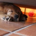 wohlverdiente Ruhepause unterm Sofa
