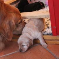 Aro begrüßt die blonde Schwester